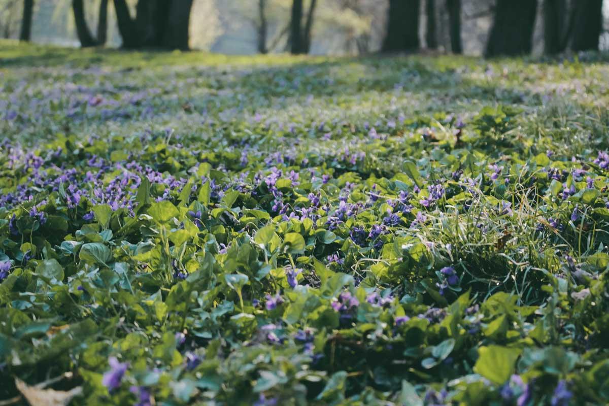 Номинация «Флора» – Сенютина Кристина, «Растительность в парке»