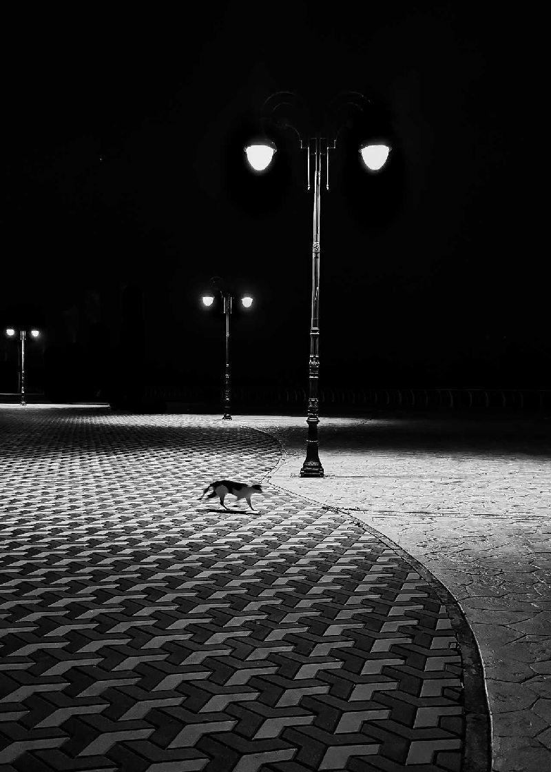 © ️ Абдулазиз Мохаммед Альсгер, Зимняя ночь
