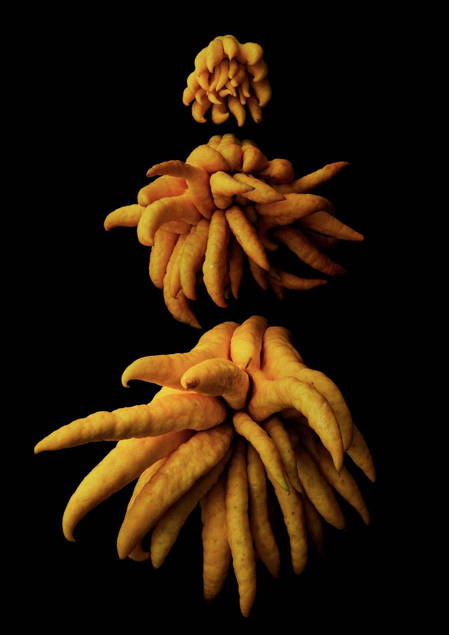 Портрет фруктов, © Масуми Шиохара, Шиоджири, Первое место в категории «Коммерческая» : любитель, Конкурс фотографий еды «Вкус» — Taste