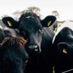 Ирландия, © Суэч и Бек, Торонто, Канада, Первое место в категории «Пункт назначения / Путешествие» : профессионал, Гран-при конкурса, Конкурс фотографий еды «Вкус» — Taste