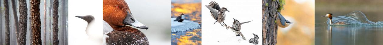 Конкурс «Очаровательная фотография птиц»