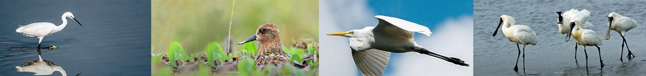 Фотоконкурс «Водоплавающие птицы» - Waterbirds Photo Contest