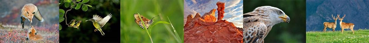 Фотоконкурс «Дикая природа»