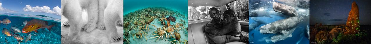 Фотоконкурс «Фотограф года дикой природы» — Wildlife Photographer of the Year