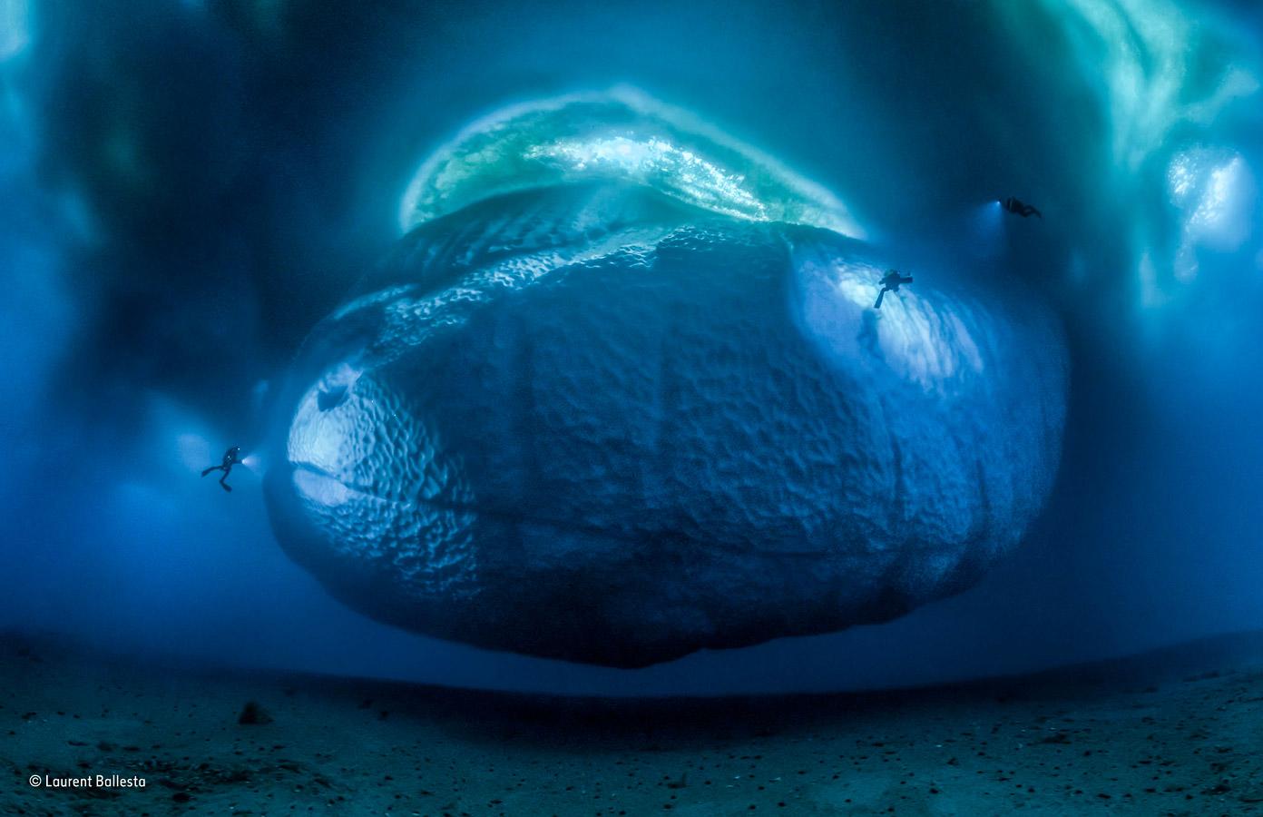 Ледяной монстр, © Лоран Баллеста / Laurent Ballesta, Франция, Победитель категории «Окружающая среда», Фотоконкурс «Фотограф года живой природы» — Wildlife Photographer of the Year