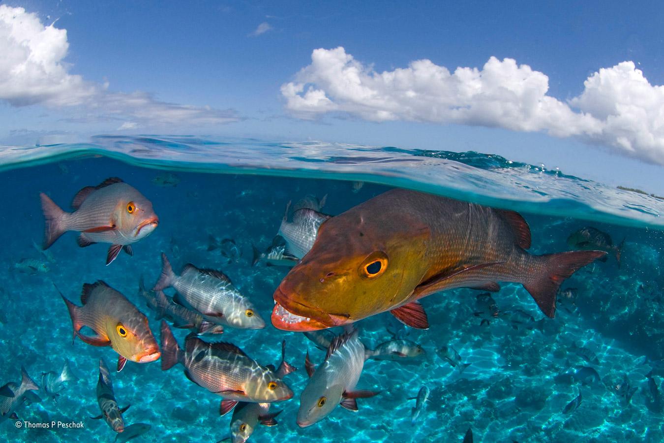 Сейшельские острова, © Томас П Песчак / Thomas P Peschak, Германия / Южная Африка, Награда «Портфолио фотографа дикой природы», Фотоконкурс «Фотограф года живой природы» — Wildlife Photographer of the Year