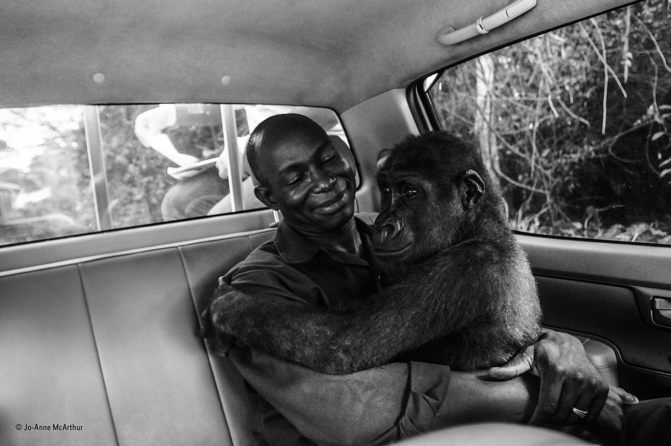 Пикин и Апполинарий, © Джо-Энн МакАртур / Jo-Anne McArthur, Канада, Специальная премия «Народное голосование», Фотоконкурс «Фотограф года живой природы» — Wildlife Photographer of the Year
