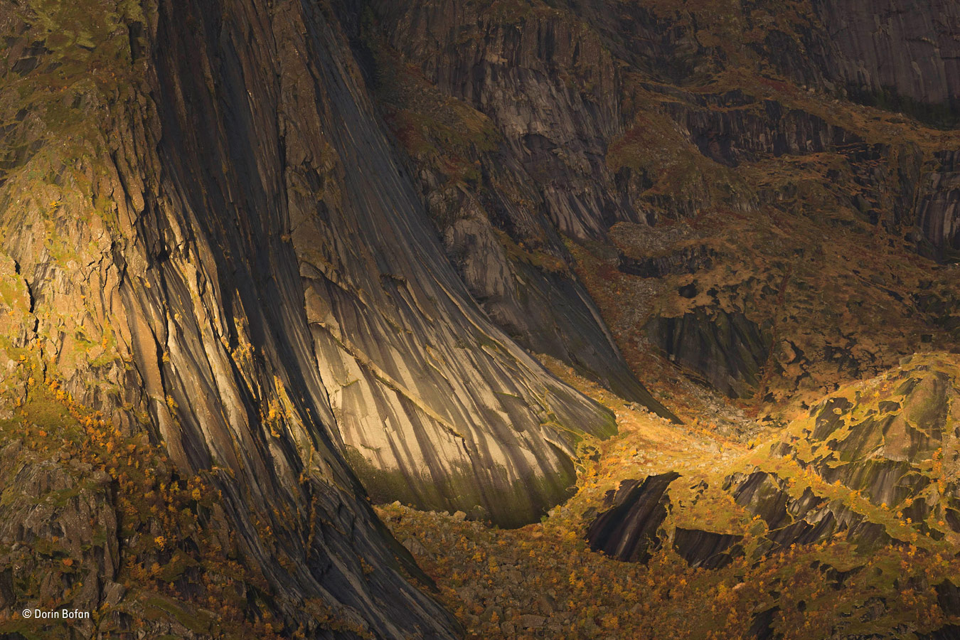 Гобелен жизни, © Дорин Бофан / Dorin Bofan, Румыния, Победитель категории «Растения и грибы», Фотоконкурс «Фотограф года живой природы» — Wildlife Photographer of the Year