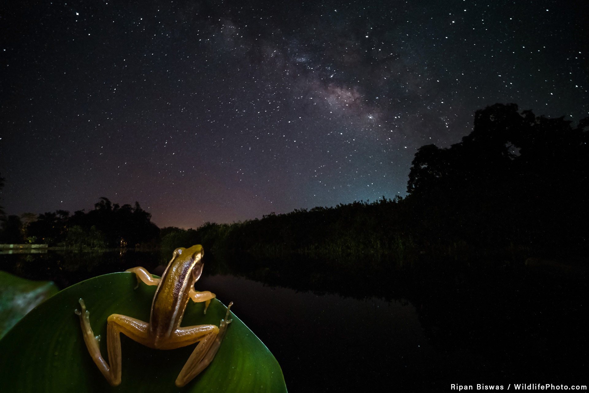 Путеводитель по галактике, © Рипан Бисвас, Фотоконкурс «Портреты дикой природы»