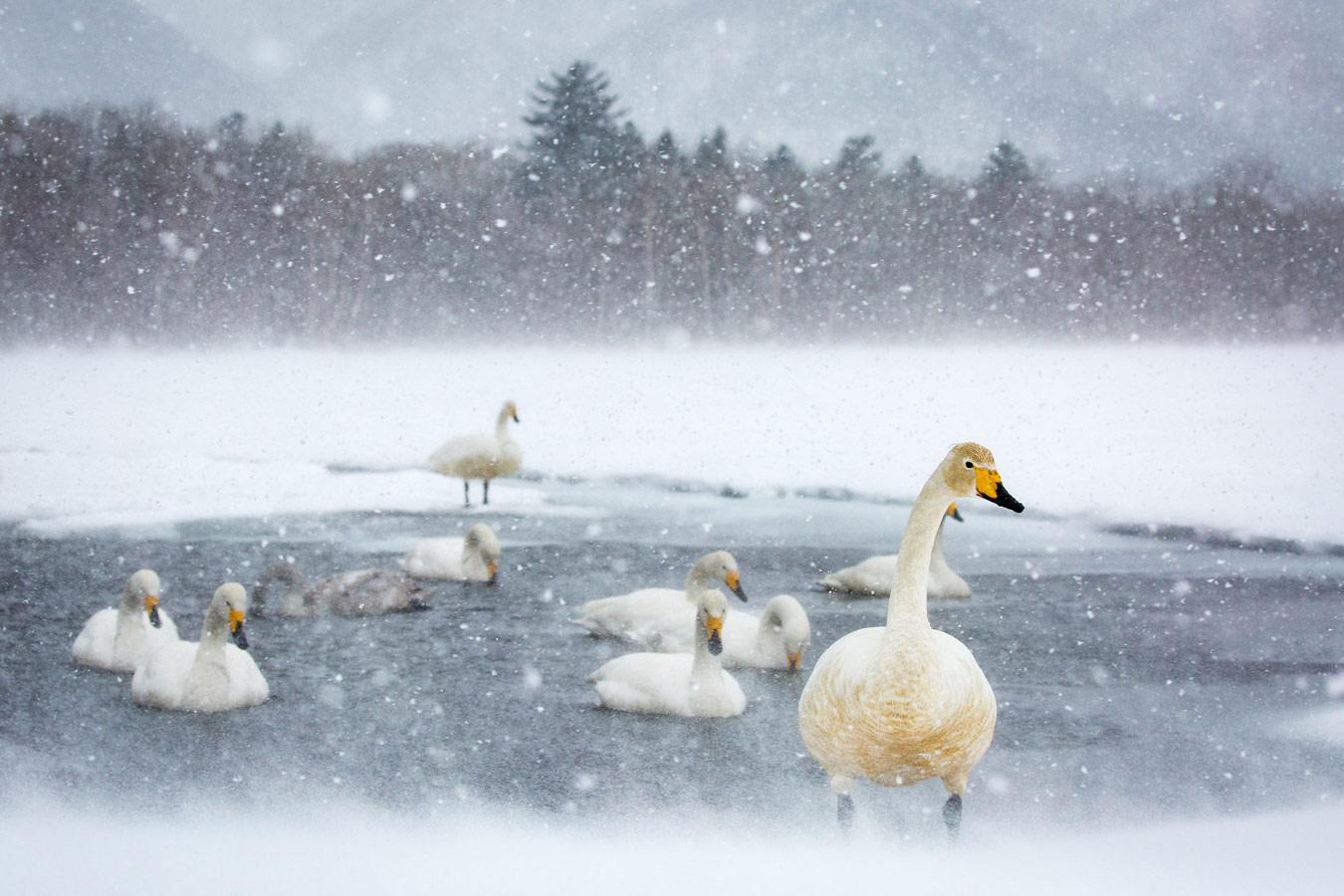 Лебединое озеро, © Келли Незервуд, Лондон, Великобритания, 1-е место в категории «Кадры путешествий», любитель, Фотоконкурс экстремальных путешествий «Мир в фокусе» — World In Focus