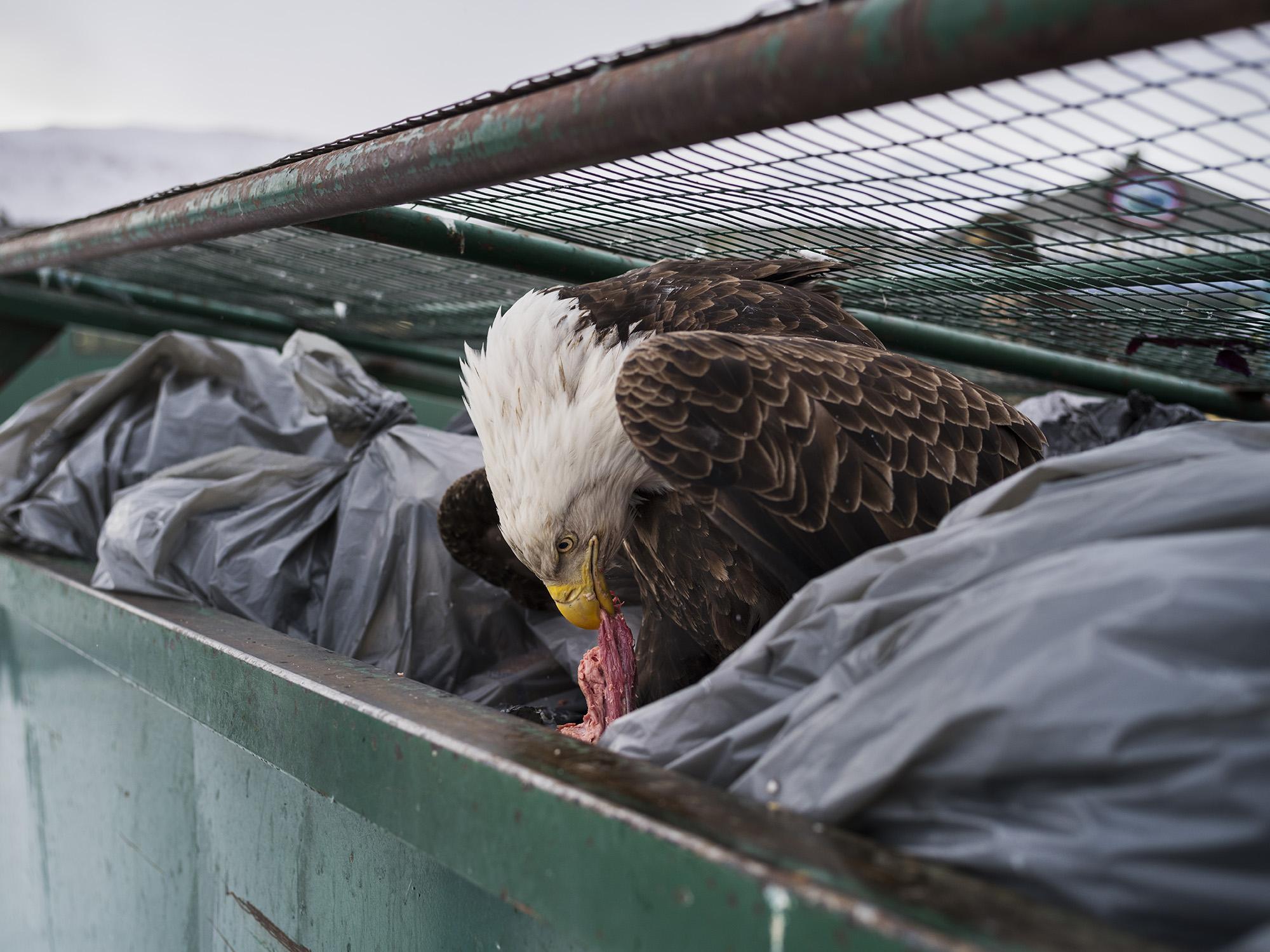 Ныряльщик в мусорный бак, © Кори Арнольд, США, 1-й приз : одиночный кадр, Фотоконкурс World Press Photo