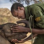 Воины, которые когда-то боялись слонов, теперь защищают их, © Ами Витале, США, 1-й приз : серия, Фотоконкурс World Press Photo