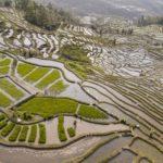 Кормление Китая, © Джордж Штайнмец, США, 2-й приз : серия, Фотоконкурс World Press Photo