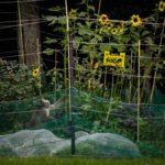 Священный, не более, © Джаспер Дост, Нидерланды, 2-й приз : серия, Фотоконкурс World Press Photo