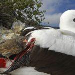 Галапагосские острова: качание колыбели, © Томас П. Песчак, Германия, 3-й приз : серия, Фотоконкурс World Press Photo