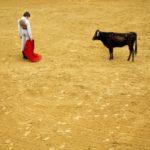 Мальчики и быки, © Николай Линарес, Дания, 3-й приз : серия, Фотоконкурс World Press Photo