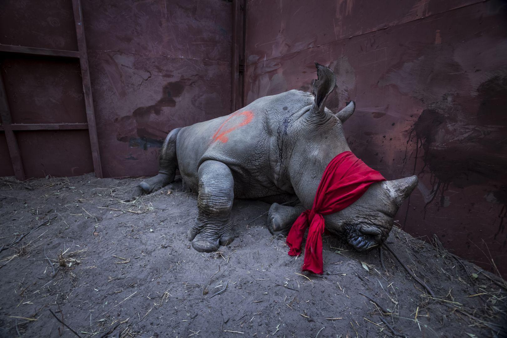 Ожидание свободы, © Нейл Олдридж, Южная Африка, 1-й приз : одиночный кадр, Фотоконкурс World Press Photo