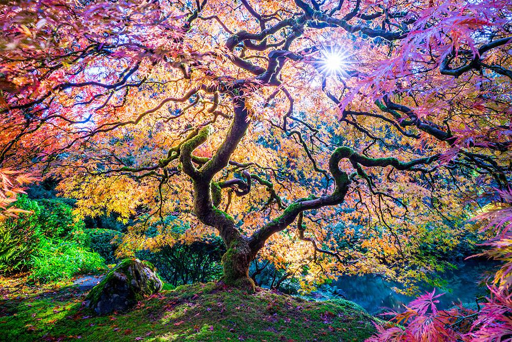 Ранг #8 (33 балла), © Торлиф Ли, Холли Хилл, США, Фотоконкурс «10 лучших мировых пейзажных фотографов»