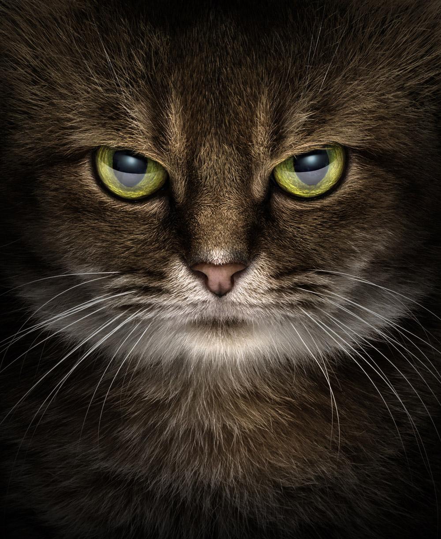 Эрих Капарас / Erich Caparas, Первое место в категории «Портрет — Животные/Домашние животные», Фотоконкурс WPPI First Half Competition 2017