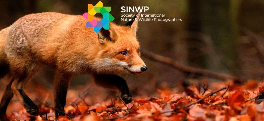 Фотоконкурс «Замечательная дикая природа» от SINWP