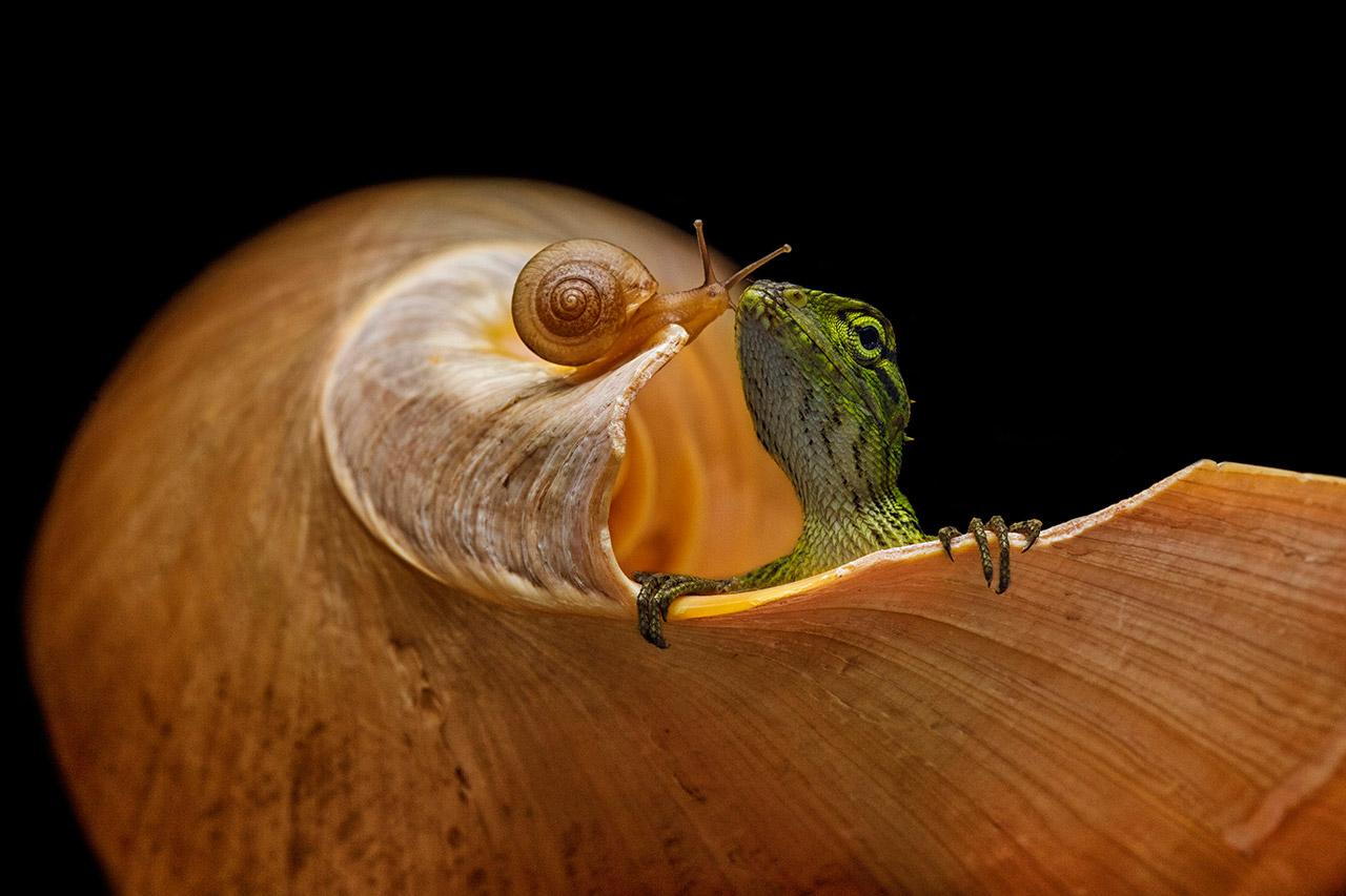 Лучший друг, © Анди Абдул Халил, Индонезия, Победитель, Международный фотоконкурс Xposure
