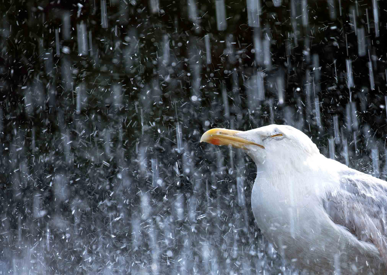 Летний душ, © Гидеон Найт, Второе место, Молодёжный фотоконкурс RSPCA