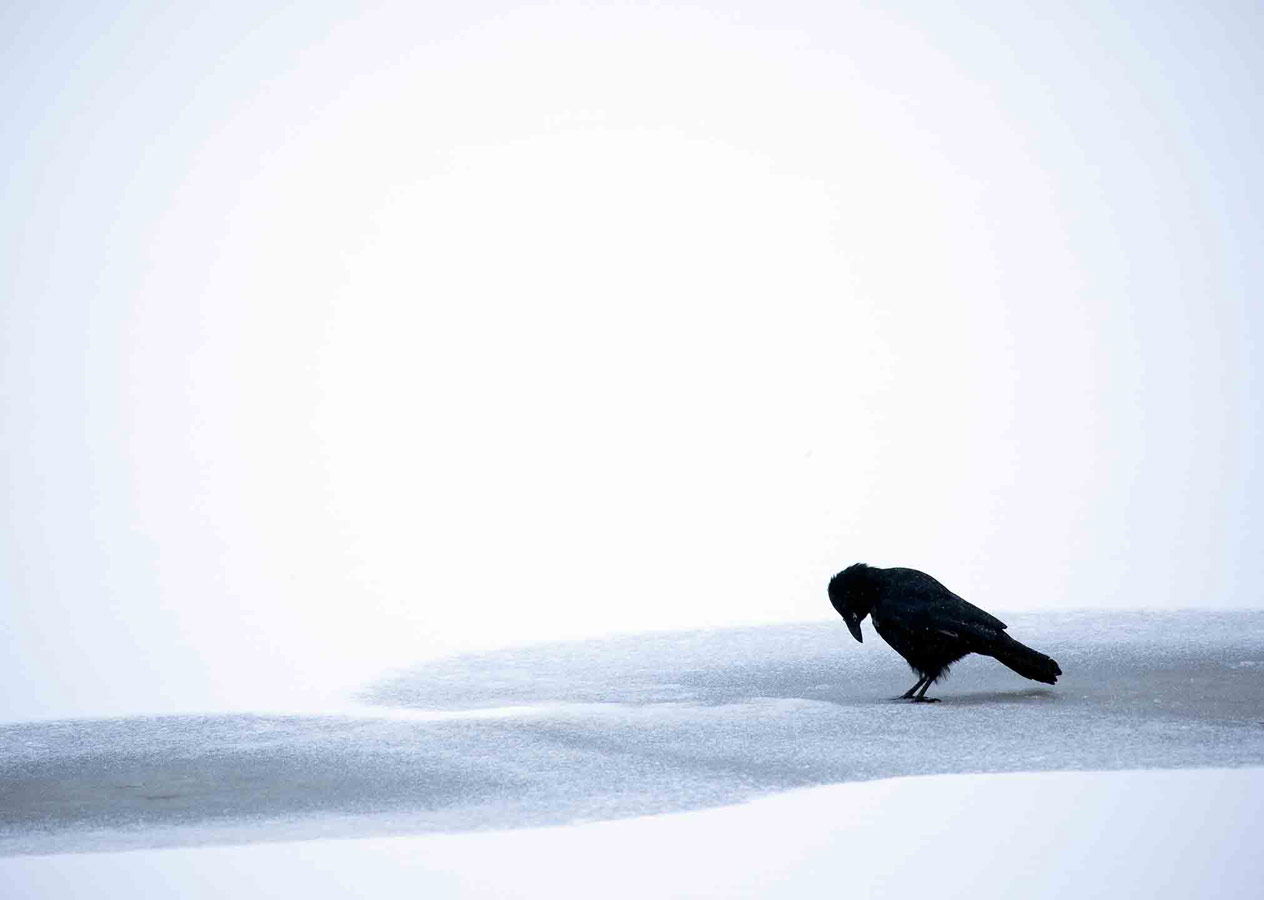 Чёрный на белом, © Гидеон Найт, Поощрительное место, Молодёжный фотоконкурс RSPCA