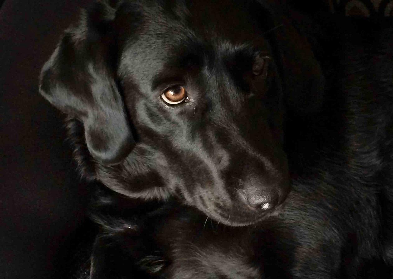 Собачка моего дедушки Белла, © Фиби О'Шогнесси, Второе место в категории «Мобильная фотография», до 12 лет, Молодёжный фотоконкурс RSPCA