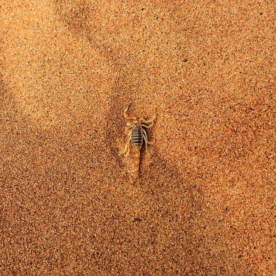 Иди осторожно, © Эйми Бристоу, Победитель в категории «Мобильная фотография», 16–18 лет, Молодёжный фотоконкурс RSPCA