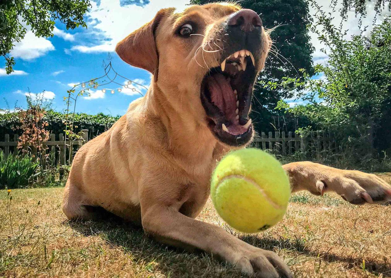 Теннисный мяч, © Киззи Портер, Второе место в категории «Мобильная фотография», 16–18 лет, Молодёжный фотоконкурс RSPCA