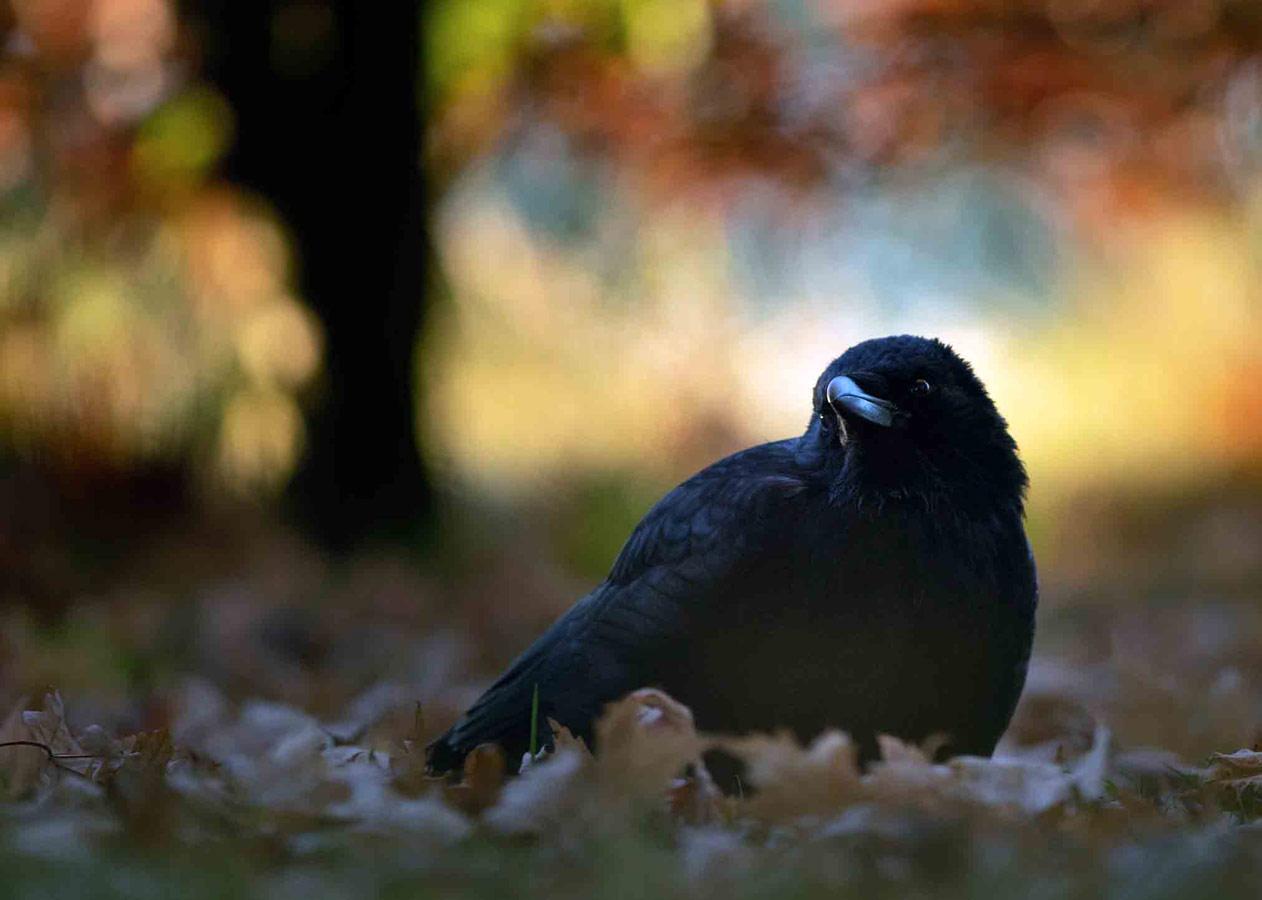 Осенним утром (2 из 5), © Гидеон Найт, Победитель, Молодёжный фотоконкурс RSPCA