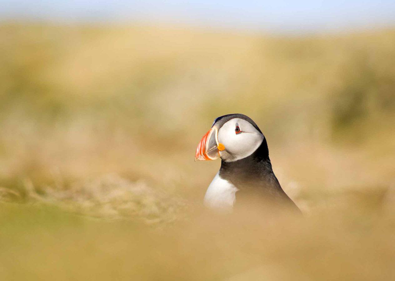 Торчащий тупик, © Джошуа Кнейл, Второе место, Молодёжный фотоконкурс RSPCA