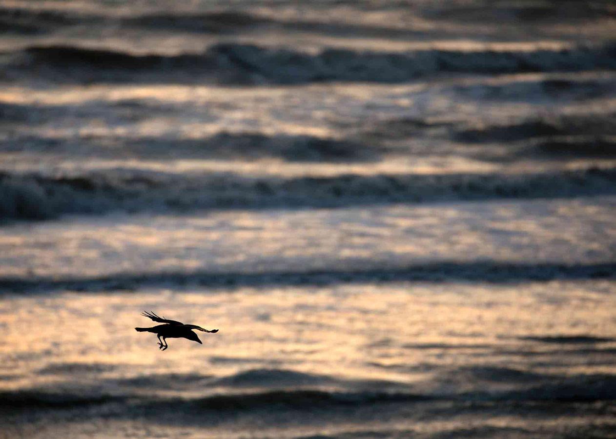 Приморский полёт (5 из 5), © Гидеон Найт, Победитель, Молодёжный фотоконкурс RSPCA