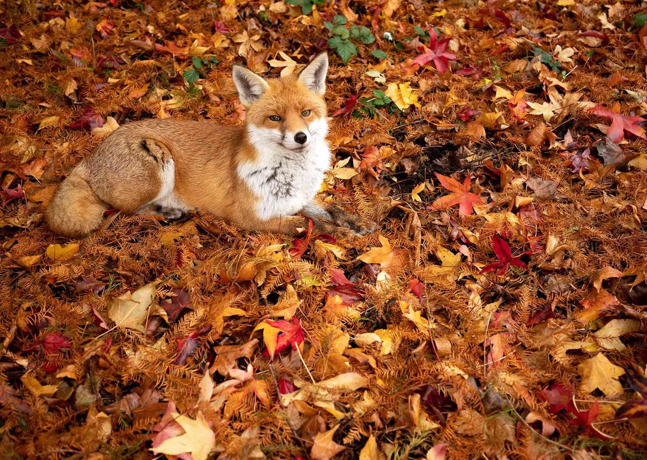 Осенний красновато-коричневый (1 из 5), © Гидеон Найт, Второе место, Молодёжный фотоконкурс RSPCA