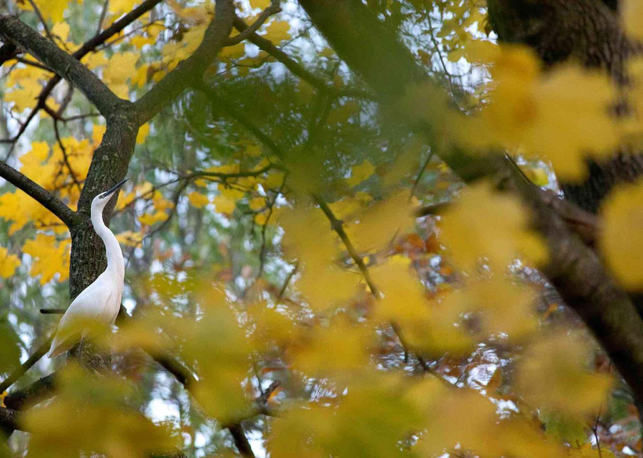 Молодая белая цапля (2 из 5), © Гидеон Найт, Второе место, Молодёжный фотоконкурс RSPCA