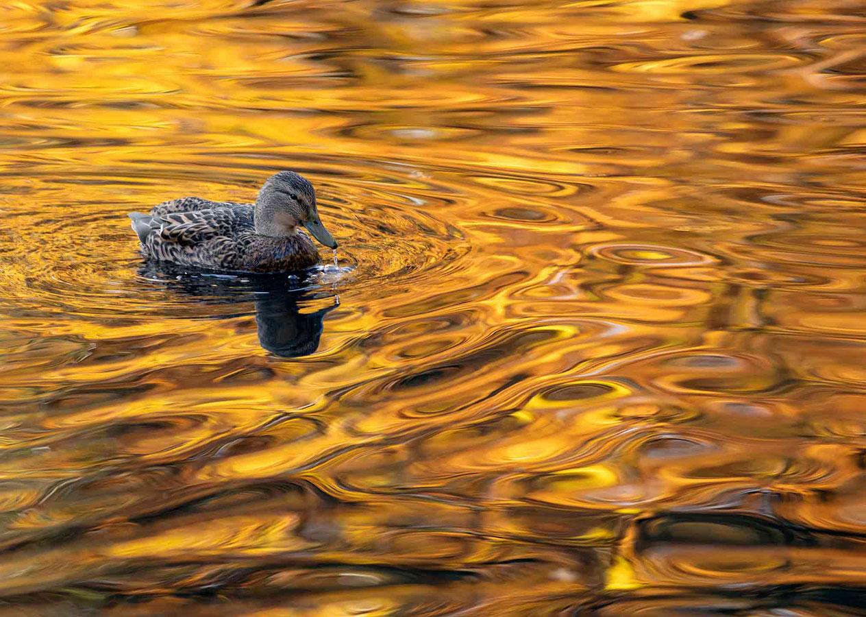 Золотое озеро (5 из 5), © Гидеон Найт, Второе место, Молодёжный фотоконкурс RSPCA