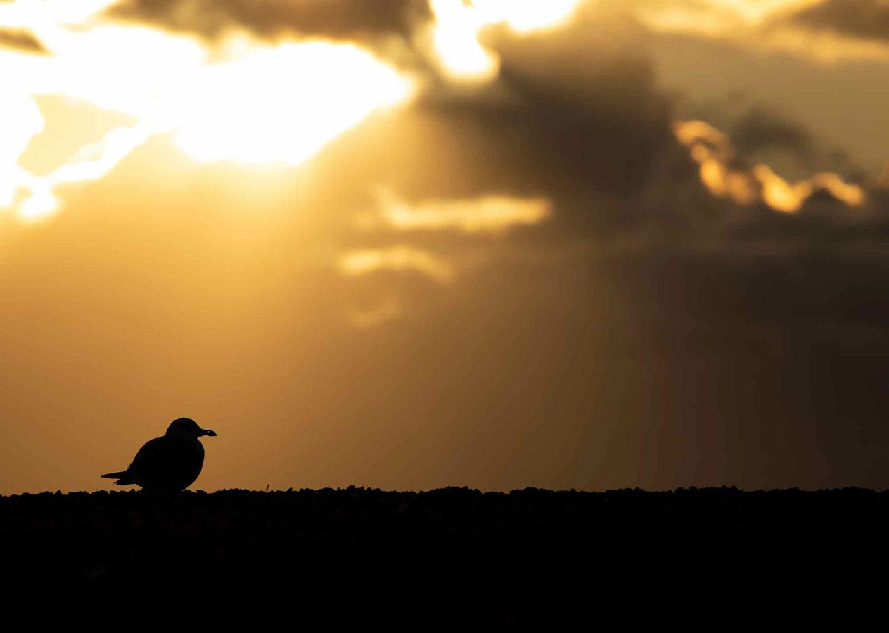 Закат (1 из 5), © Гидеон Найт, Поощрительное место, Молодёжный фотоконкурс RSPCA