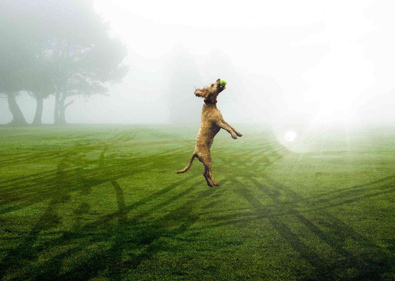 Прыжок верности, © Олли Росс, Победитель, Молодёжный фотоконкурс RSPCA