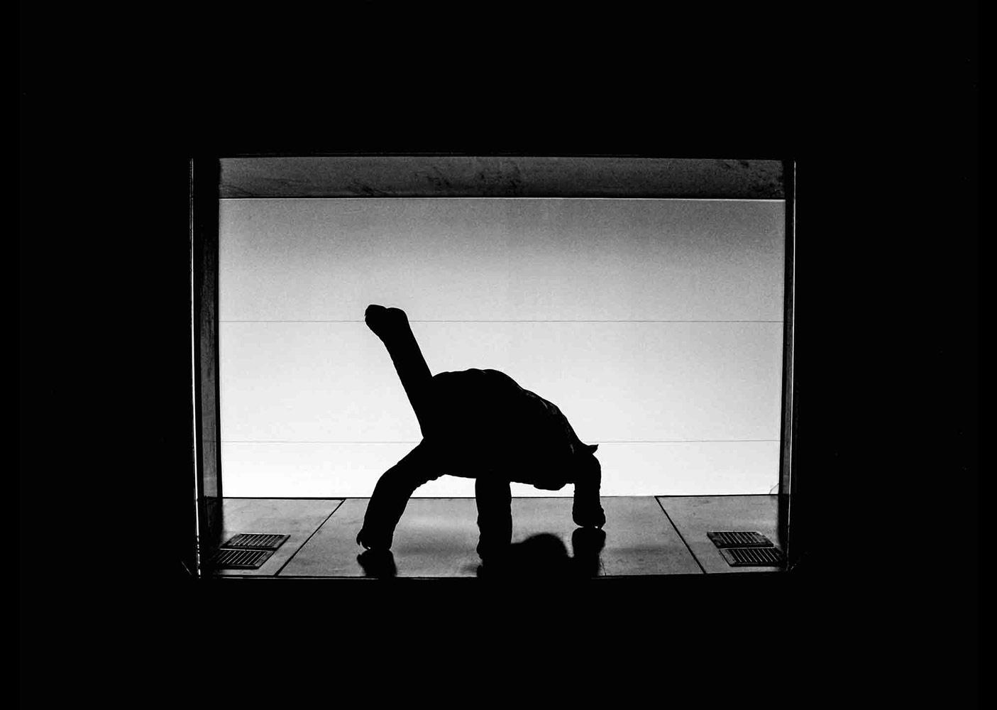 Одинокий Джордж, © Люси Хаттон, Победитель в категории «Влияние человека на животных», Абсолютный победитель, Молодёжный фотоконкурс RSPCA