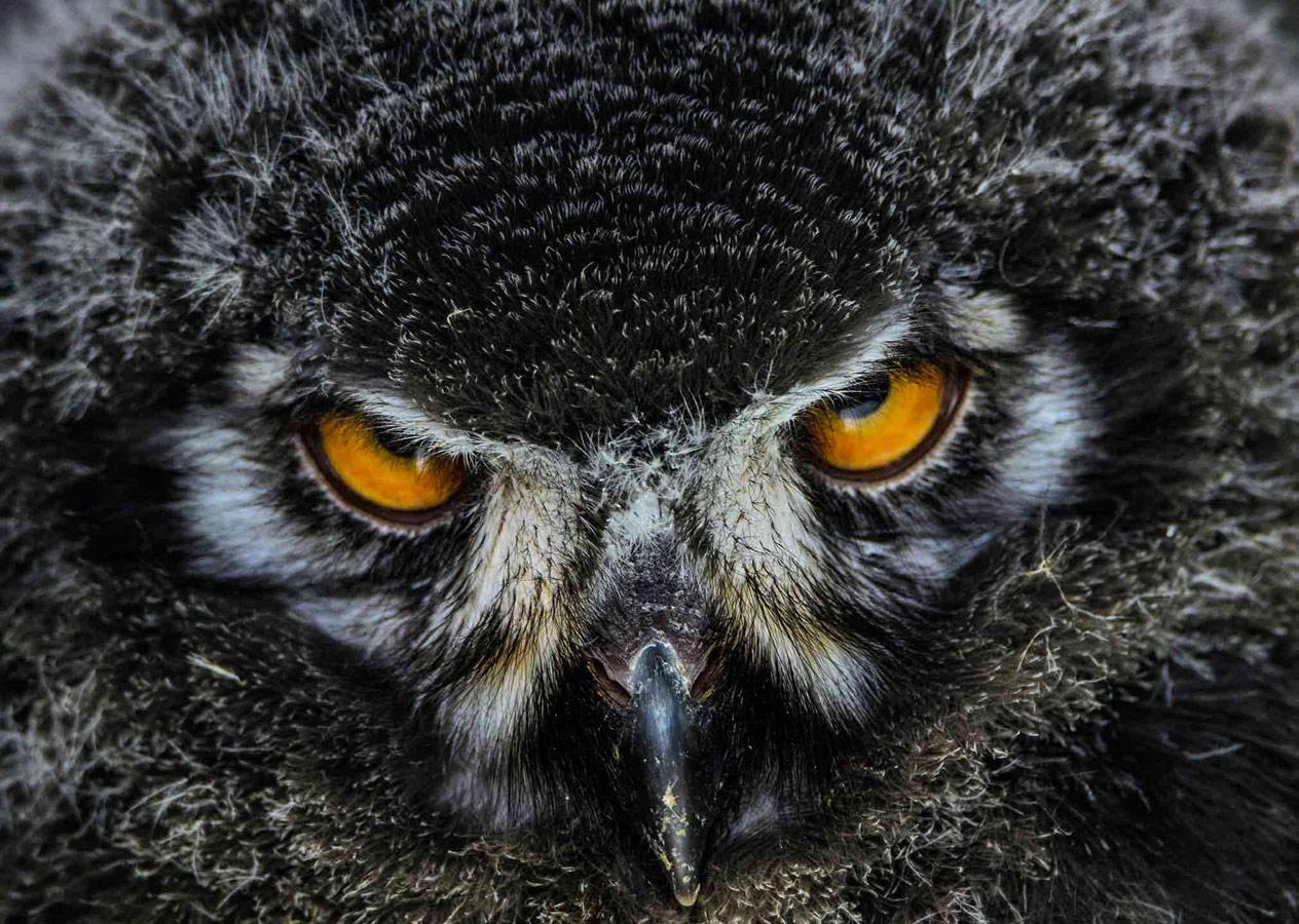 Взгляд, © Джошуа Майерс, Второе место, Молодёжный фотоконкурс RSPCA