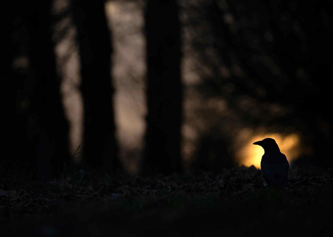 В угасающем свете, © Гидеон Найт, Победитель, Молодёжный фотоконкурс RSPCA