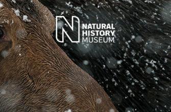 Конкурс «Молодой фотограф дикой природы года»