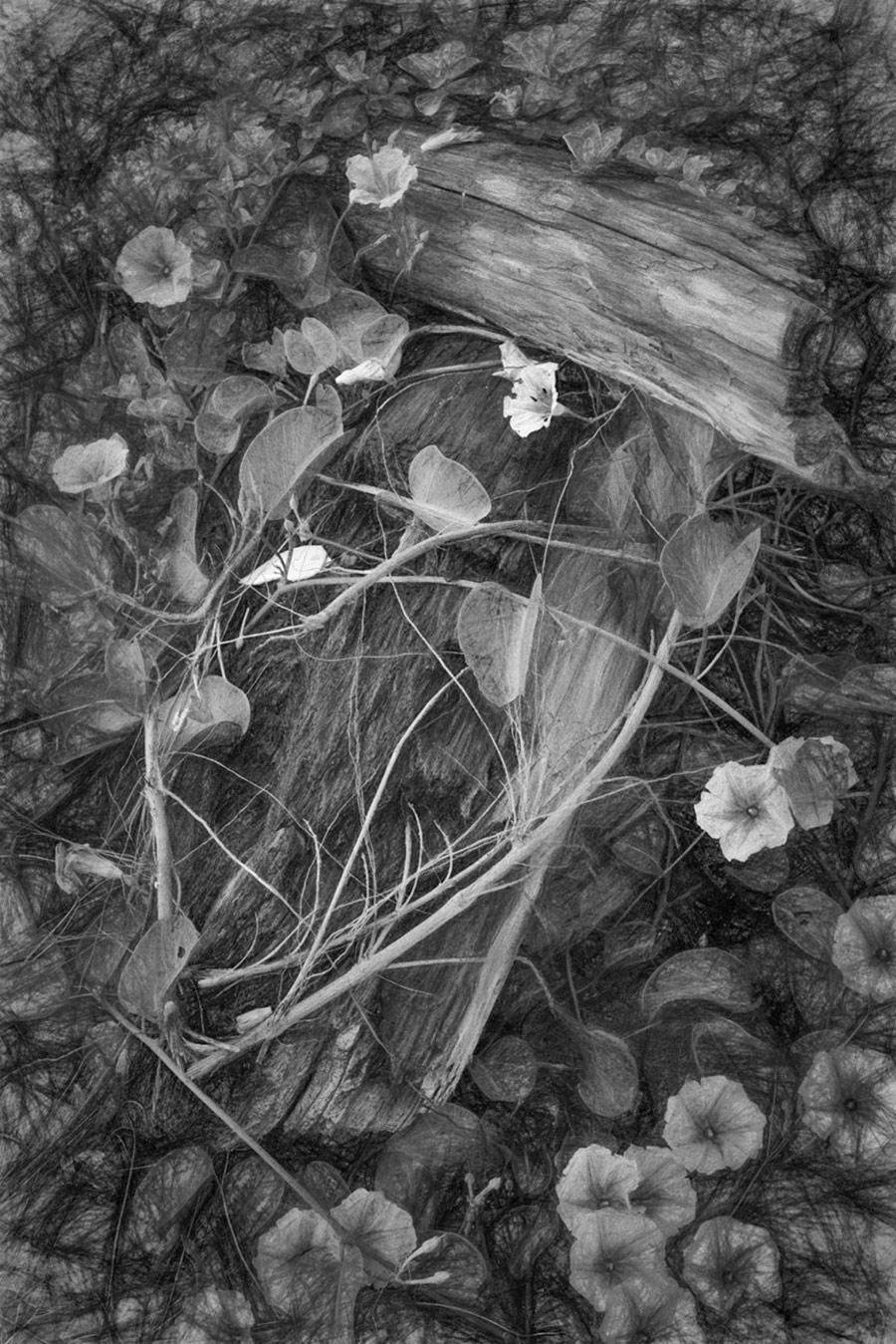 Живая утренняя красота, © Ǒ�卿 ƈ�, 3-е место в категории «Абстракция и современность», непрофессионал, Фотоконкурс «Зебра» — Zebra — Чёрно-белый фотограф года