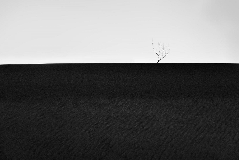 Веточка на вершине, © Грегори Д'Агостино, 3-е место в категории «Пейзаж и природа», непрофессионал, Фотоконкурс «Зебра» — Zebra — Чёрно-белый фотограф года