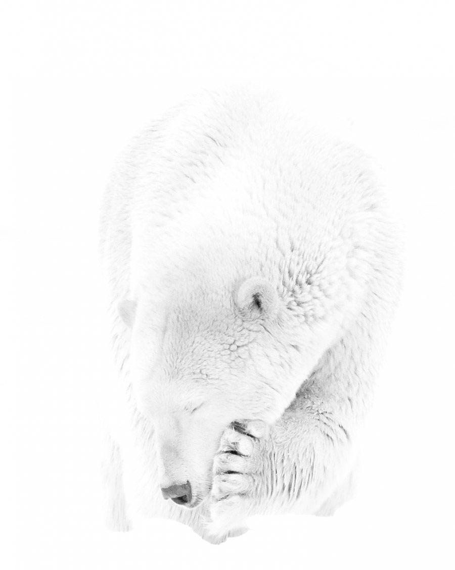 Полярное утешение, © Прелена Сома Овен, 1-е место в категории «Люди и животные», непрофессионал, Фотоконкурс «Зебра» — Zebra — Чёрно-белый фотограф года