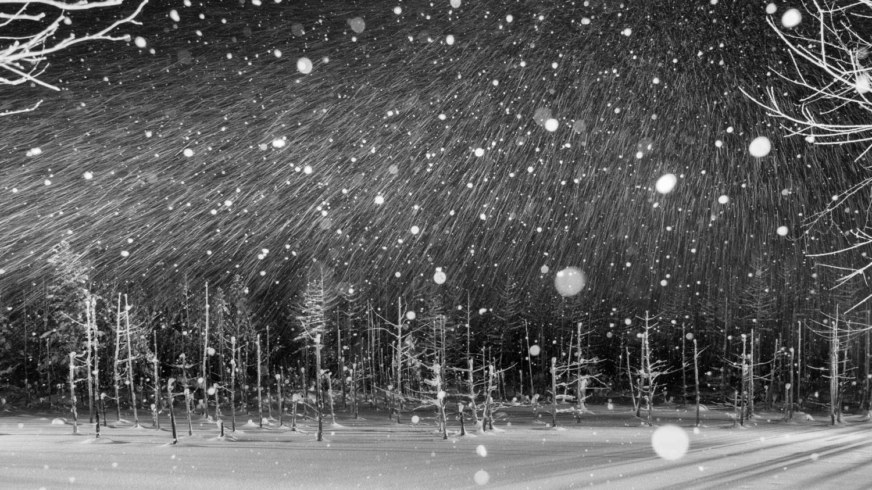 Снежная ночь<br> © Йошихиро АБИКО, 1-е место в категории «Пейзаж и природа», профессионал, Гран-при, профессионал, Фотоконкурс «Зебра» — Zebra — Чёрно-белый фотограф года