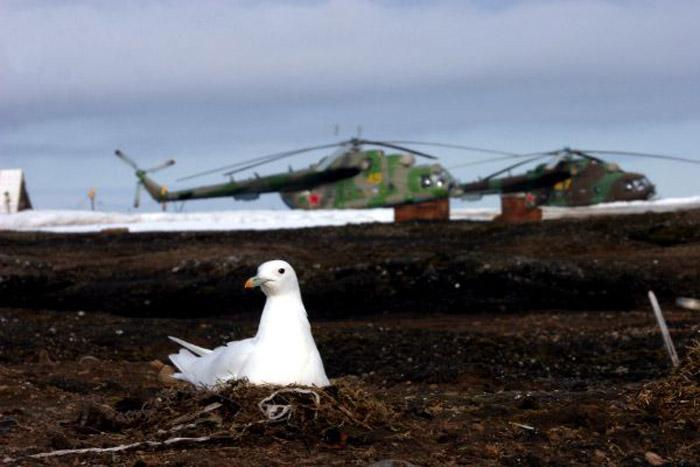 © Анастасия Титова, Фотоконкурс «Живём на Севере»