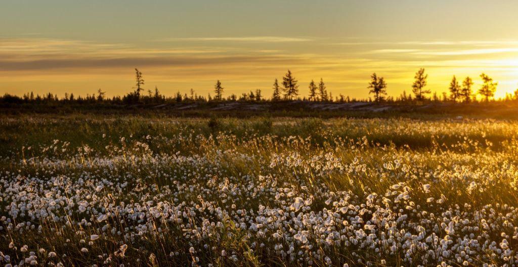© Михаил Брехов, Фотоконкурс «Живём на Севере»
